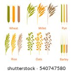 Cereals Plants Set....