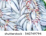 Small photo of Butter catfish, Two-spot glass catfish,Ompok bimaculatus,Sheatfish,Siluridae,fish background