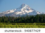 Mt Hood And Vineyards