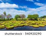 Ramgoolam Botanical Garden ...