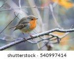 bird robin sitting among the... | Shutterstock . vector #540997414
