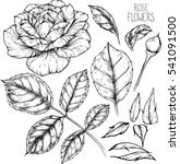 rose flowers drawing vector... | Shutterstock .eps vector #541091500