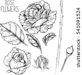 rose flowers drawing vector... | Shutterstock .eps vector #541091524