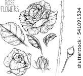 rose flowers drawing vector... | Shutterstock .eps vector #541091524