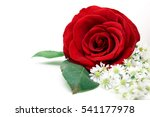 Red Roses And Daisies On White...
