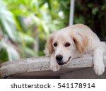 lovely funny white cute fat... | Shutterstock . vector #541178914