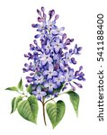 big branch of purple syringa.... | Shutterstock . vector #541188400