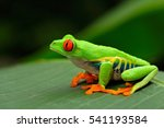 red eyed tree frog  agalychnis... | Shutterstock . vector #541193584
