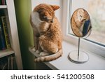 cat in a mirror | Shutterstock . vector #541200508