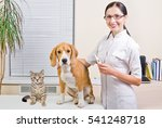 Stock photo veterinarian beagle dog and kitten 541248718