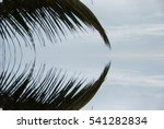 Abstract Caribbean Palm Tree...