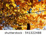 autumn foliage on a sunny day   Shutterstock . vector #541322488