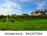 napa valley california vineyard ...   Shutterstock . vector #541347034