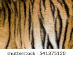 Tiger Fur In A Close Up  As A...