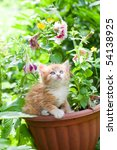 Stock photo kitten 54138925