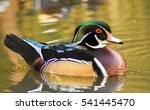 Male Wood Duck Swimming On...