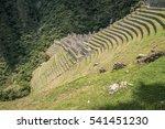 Small photo of Winay Wayna Inca building on Inca Trail, Peru