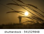 grass blowing in the wind at... | Shutterstock . vector #541529848