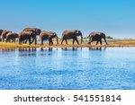 watering in the okavango delta.... | Shutterstock . vector #541551814