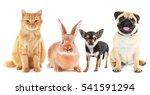 cute friendly pets on white... | Shutterstock . vector #541591294