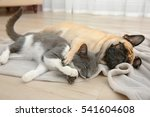 Stock photo adorable pug and cute cat lying together on plaid 541604608