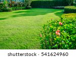 blurred green lawn  the front... | Shutterstock . vector #541624960