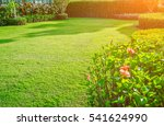 green lawn  the front lawn for... | Shutterstock . vector #541624990