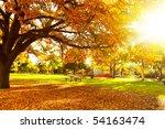 autumn tree with sun beam   Shutterstock . vector #54163474