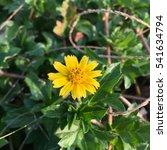 yellow flower | Shutterstock . vector #541634794