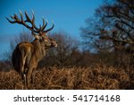 red deer | Shutterstock . vector #541714168