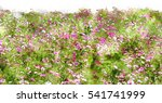 cosmos flower field watercolor... | Shutterstock . vector #541741999