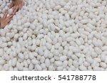 silkworm cocoons in weave... | Shutterstock . vector #541788778