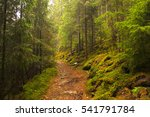 forest path in carpathians | Shutterstock . vector #541791784