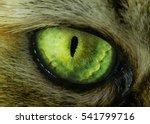 Tabby Evil Cat Macro Green Eye