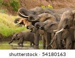 a herd of african elephants...   Shutterstock . vector #54180163