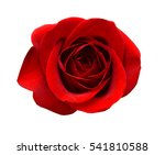 Stock photo beautiful red rose isolated on white 541810588