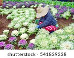gardeners are maintained... | Shutterstock . vector #541839238