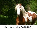 Bay And White Gelding In The...