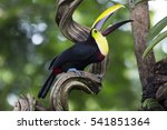 yellow throated toucan with his ... | Shutterstock . vector #541851364
