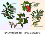 set of medicinal plants ... | Shutterstock .eps vector #541880398