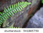 Small photo of Lush Green Fern Growing in Brick Wall Against All Odds