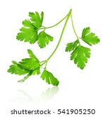parsley with reflection on an... | Shutterstock . vector #541905250