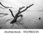 Driftwood And Washed Out Trees...