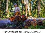 johor bahru  malaysia. 24 dec... | Shutterstock . vector #542022910