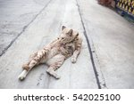 a cat is lying on the village... | Shutterstock . vector #542025100