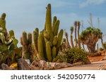cactus landscape. mexico.... | Shutterstock . vector #542050774