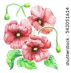 delicate vintage watercolor... | Shutterstock . vector #542051614