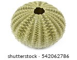 Sea Urchin Isolated On White...