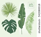 palm tree leaves graphic set | Shutterstock .eps vector #542080018