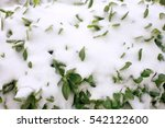 First Snow On Green Leaves....